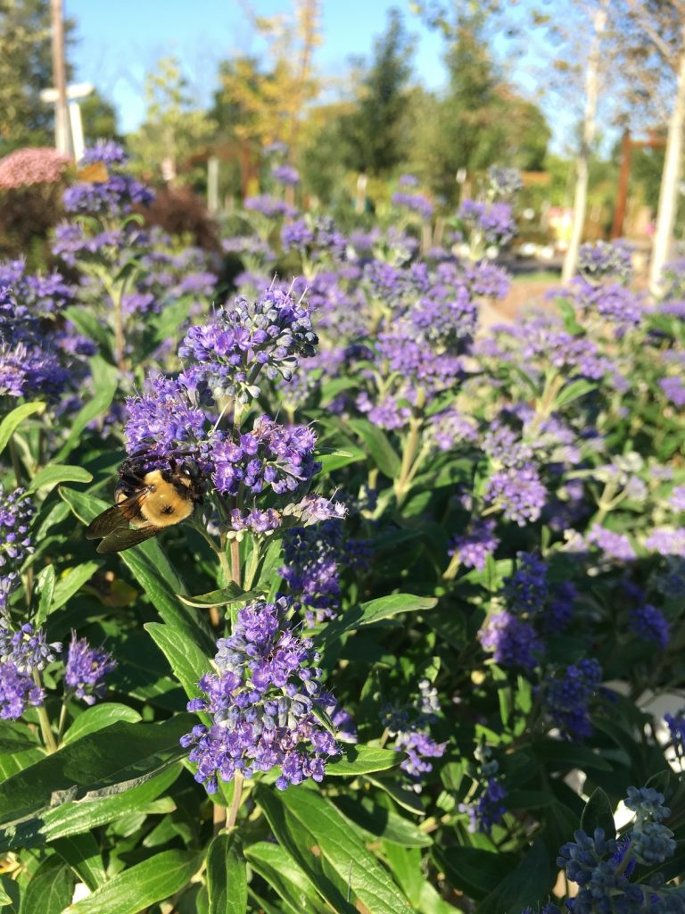 ALLISONVILLE NURSERY GARDEN & HOME: Diversify Your Garden With Pollinator Plants